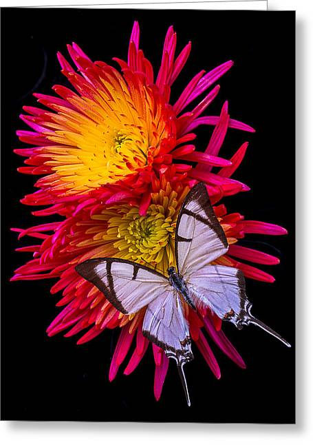 Antenna Greeting Cards - White Butterfly On Fire Mum Greeting Card by Garry Gay