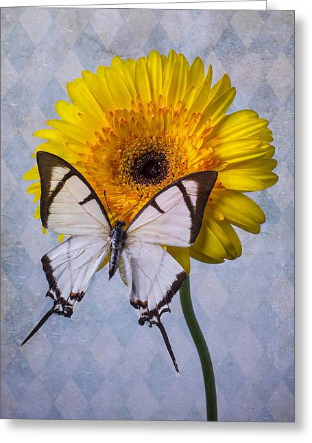 White Daises Greeting Cards - White Butterfly On Mum Greeting Card by Garry Gay