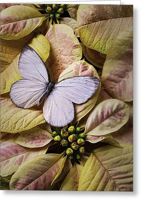 White Butterfly On Poinsettia Greeting Card by Garry Gay