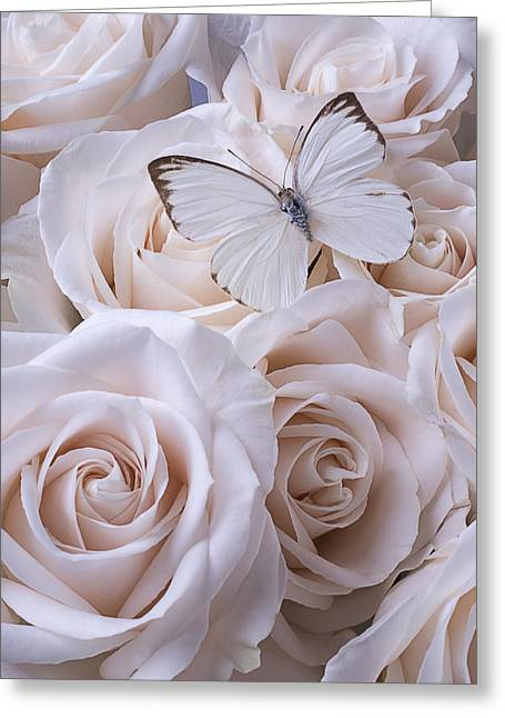 Gorgeous Flowers Greeting Cards - White Butterfly On White Roses Greeting Card by Garry Gay