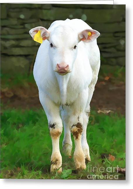 Ear Tags Greeting Cards - White Calf Greeting Card by Louise Heusinkveld