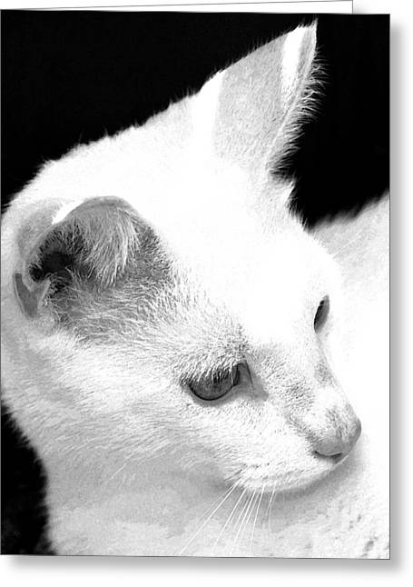 Photos Of Cats Drawings Greeting Cards - White cat - fresco Greeting Card by Tine Nordbred