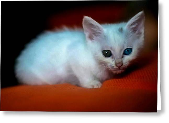 Sweetly Greeting Cards - White cat on red couch Greeting Card by Lanjee Chee