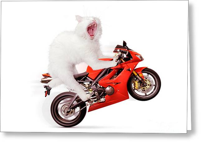 Ridiculous Greeting Cards - White cat riding motorcycle Greeting Card by Oleksiy Maksymenko