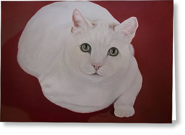 Fineartamerica Greeting Cards - White cat Greeting Card by Zina Stromberg