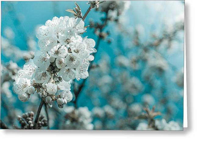 Plantlife Greeting Cards - White Cherry Blossoms Blooming Greeting Card by Nila Newsom