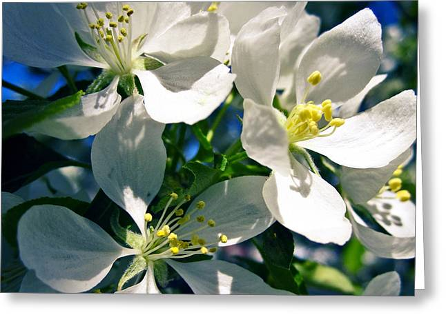 Julie Magers Soulen Greeting Cards - White Cherry Blossoms in the Spring Greeting Card by Julie Magers Soulen