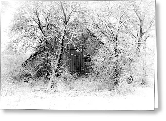 Storm Prints Greeting Cards - White Christmas 1 Greeting Card by Julie Hamilton