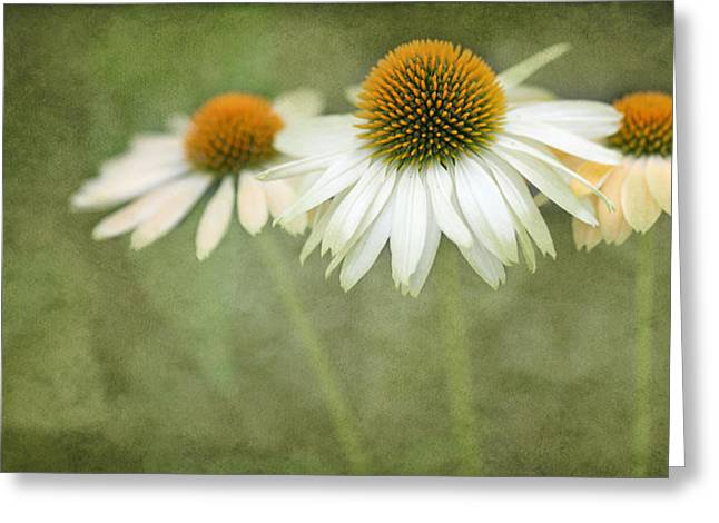 Coneflower Greeting Cards - White Coneflower Trio  2 Greeting Card by Rebecca Cozart