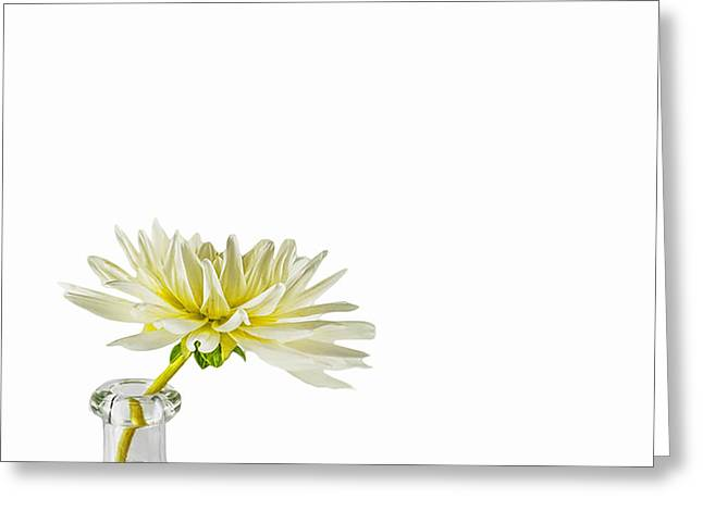 Daliha Greeting Cards - White Dahlia Blossom Greeting Card by Jan Hagan