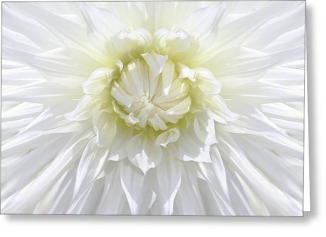 White Dahlia Floral Delight Greeting Card by Jennie Marie Schell