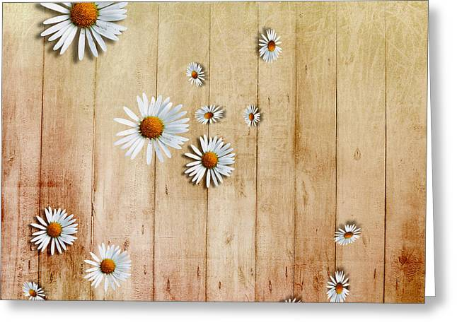 Daisy Greeting Cards - White Daisies Greeting Card by David Ridley