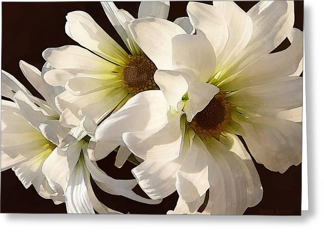 Garden Greeting Cards - White Daisies in Sunshine Greeting Card by Susan Savad
