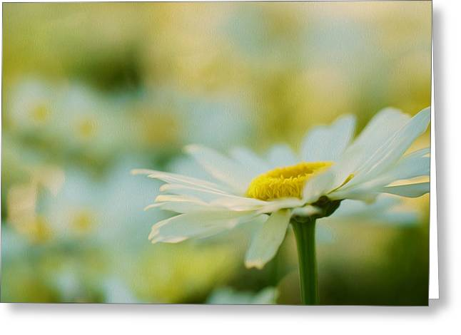 Green Greeting Cards - White Daisy Greeting Card by Lanjee Chee