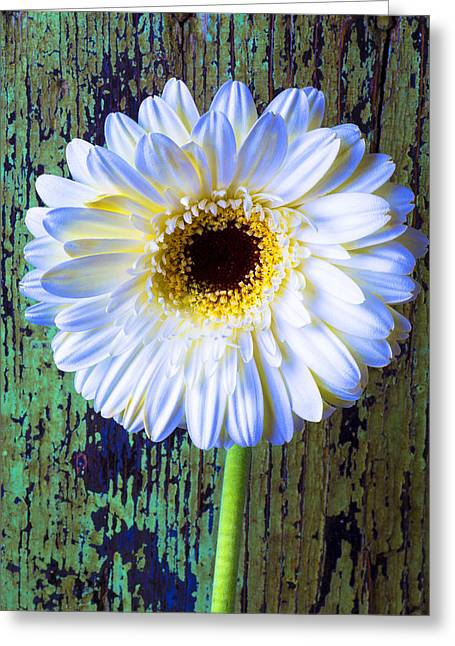 White Daises Greeting Cards - White Daisy With Green Wall Greeting Card by Garry Gay