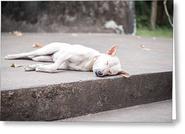 Lazy Red Dog Greeting Cards - White dog sleeping Greeting Card by Nikita Buida
