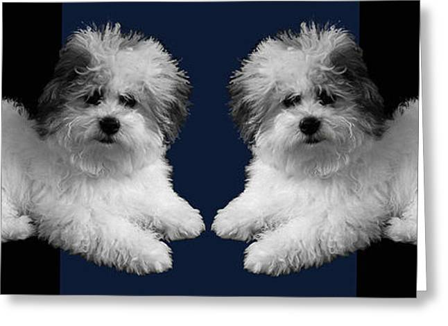Puppy Digital Greeting Cards - White Dogs Blue Pillow Greeting Card by Doris Rowe