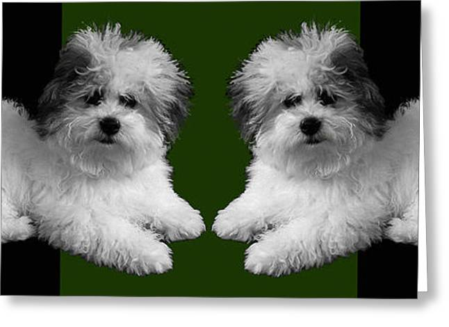 Puppy Digital Greeting Cards - White Dogs Green Pillow Greeting Card by Doris Rowe
