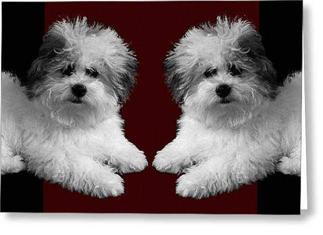 Puppy Digital Greeting Cards - White Dogs Red Pillow Greeting Card by Doris Rowe