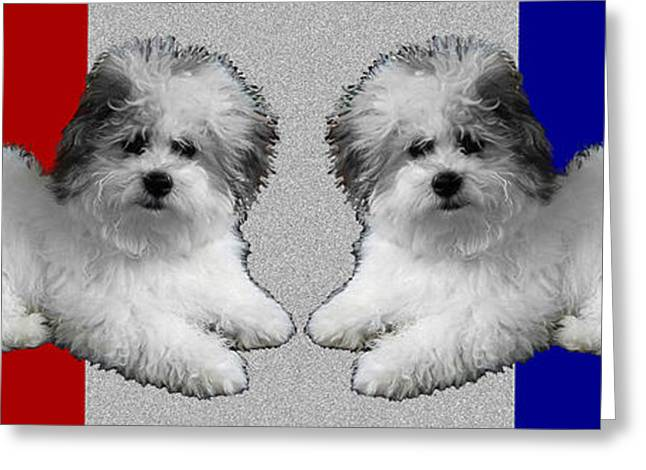 Puppy Digital Greeting Cards - White Dogs Grey Pillow Greeting Card by Doris Rowe