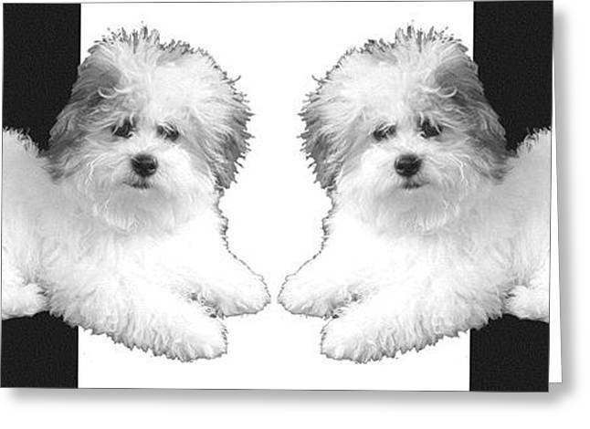 Puppy Digital Greeting Cards - White Dogs - White Pillow Greeting Card by Doris Rowe