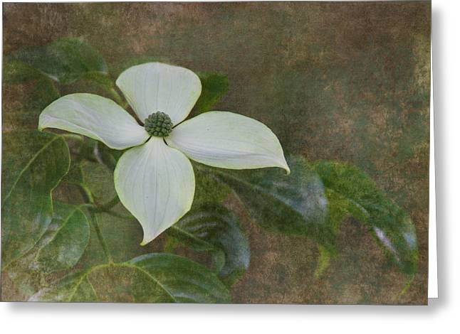 Dogwood Blossom Greeting Cards - White Dogwood Greeting Card by Angie Vogel