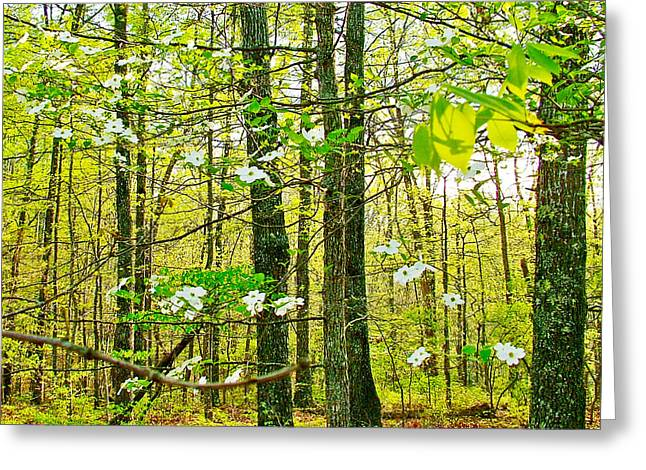 Natchez Trace Parkway Greeting Cards - White Dogwood in Meriwether Lewis Campground at Mile 386 of Natchez Trace Parkway-TN Greeting Card by Ruth Hager