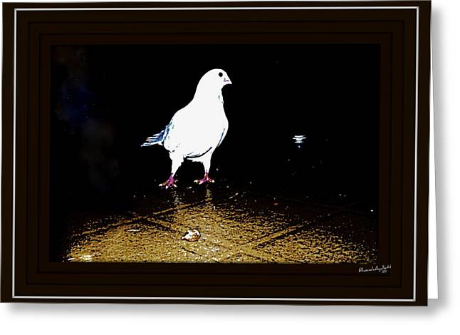 White Dove Greeting Card by YoMamaBird Rhonda