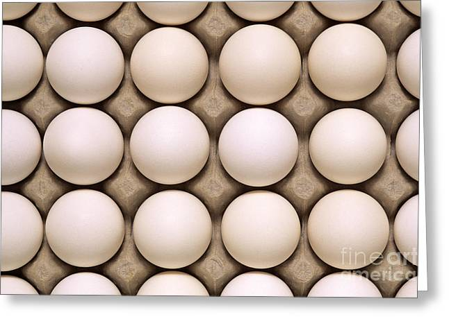 Chicken On Eggs Greeting Cards - White eggs in carton Greeting Card by Jim Corwin