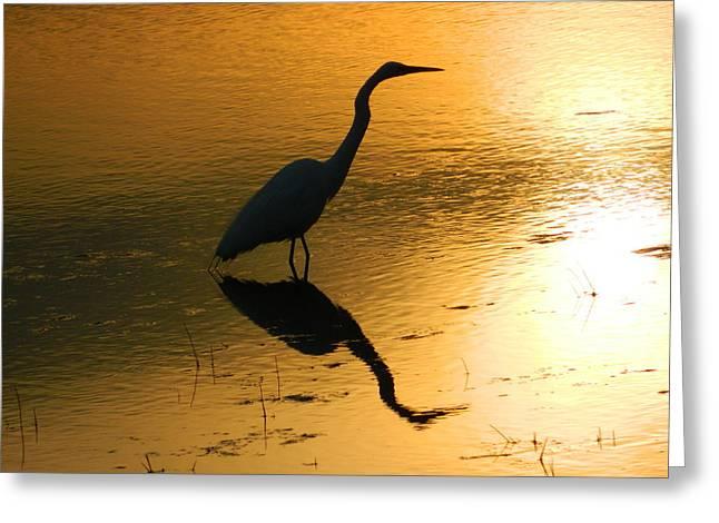White Egret Reflection Greeting Card by Nancy Spirakus