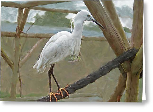 Animal Glass Greeting Cards - White Egret Greeting Card by Rumyana Whitcher