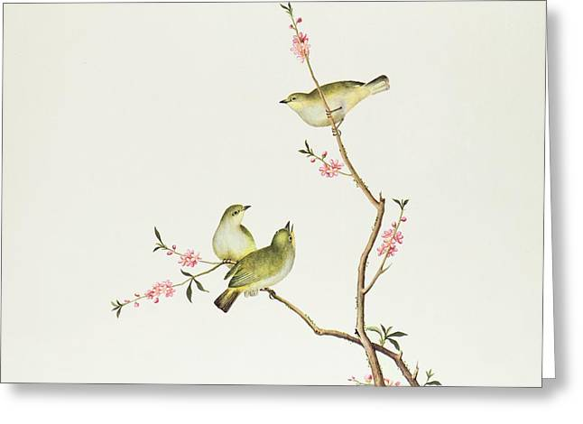 Dynasty Greeting Cards - White Eye Bird Greeting Card by Chinese School