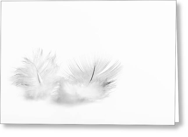 White Feather Greeting Cards - White Feathers Greeting Card by Gary Gillette