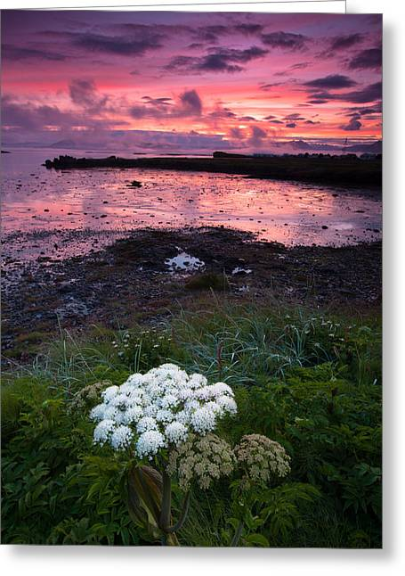 White Flower At Sunset Greeting Card by Ruben Vicente
