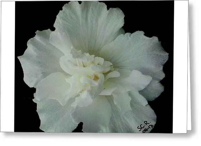 Reverence Digital Art Greeting Cards - White Flower by Saribelle Rodriguez Greeting Card by Saribelle Rodriguez