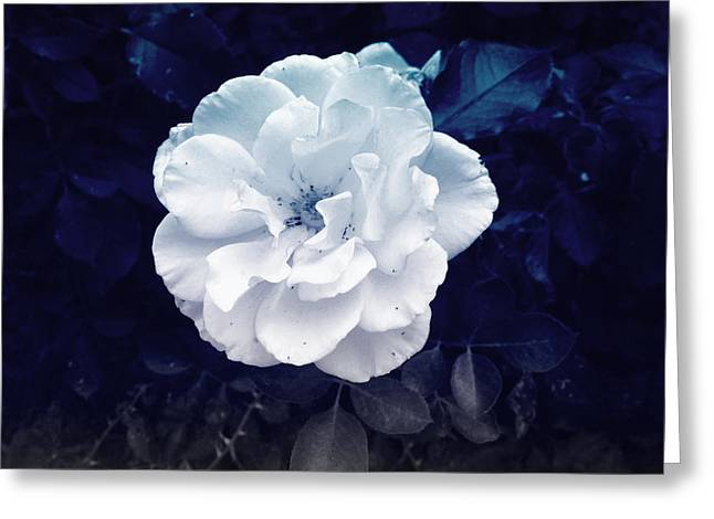 Bush Greeting Cards - White Flower Greeting Card by Felix Concepcion