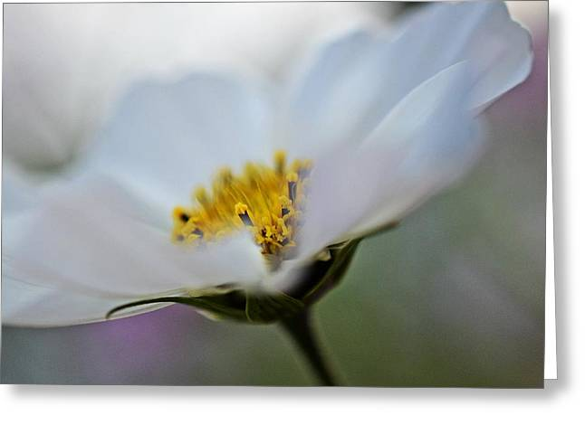 White Photographs Greeting Cards - White Flower - Fine Art Macro Photography Greeting Card by Marianna Mills