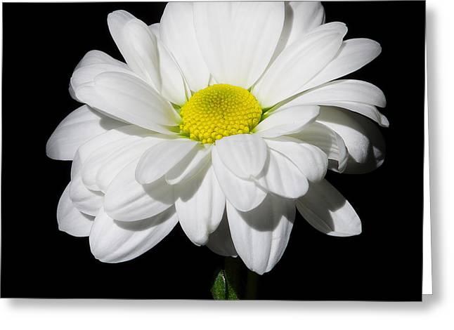 White Flower Greeting Card by Gennadiy Golovskoy