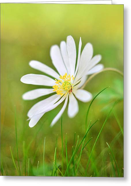 White Flower Greeting Card by Gynt