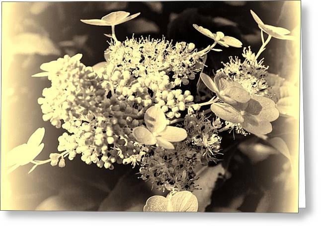 White Digital Art Greeting Cards - white flower SV Greeting Card by Leif Sohlman