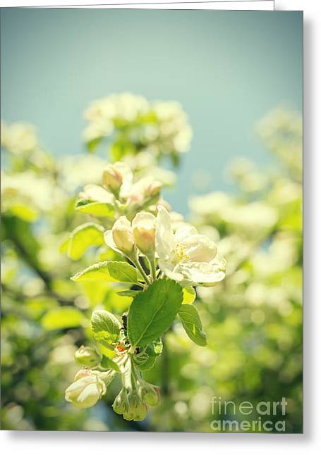 Apricot Greeting Cards - White Flowers On Blue Sky Greeting Card by Aleksey Tugolukov