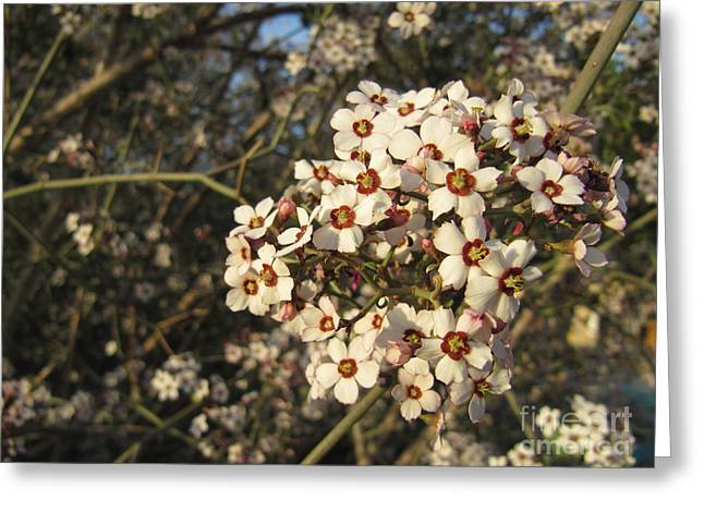 White flowers tree Greeting Card by Ioana Ciurariu