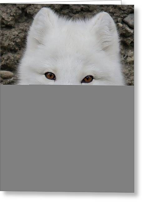 Bright Art Of Dogs Greeting Cards - White Fox Greeting Card by Athena Mckinzie