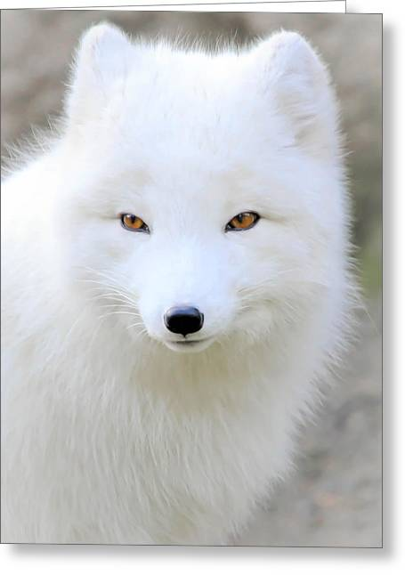 Bright Art Of Dogs Greeting Cards - White Fox Puff Greeting Card by Athena Mckinzie