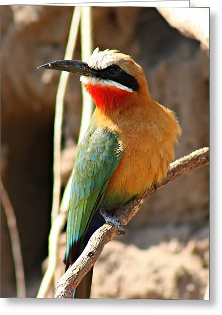 Green Forehead Greeting Cards - White Fronted Bee Eater Greeting Card by Amanda Stadther