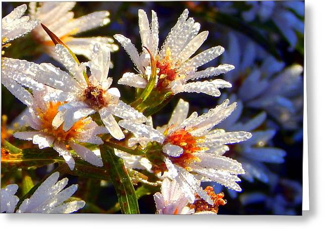 Twinkle Greeting Cards - White Frost Greeting Card by Karen Cook