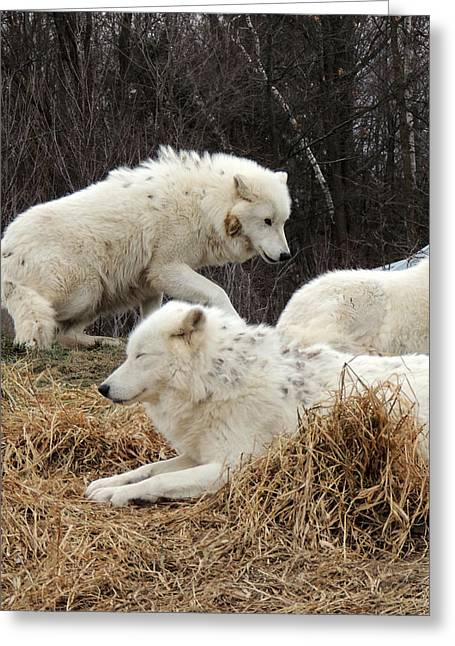 White Fur Greeting Cards - White Furs Greeting Card by Munir Alawi