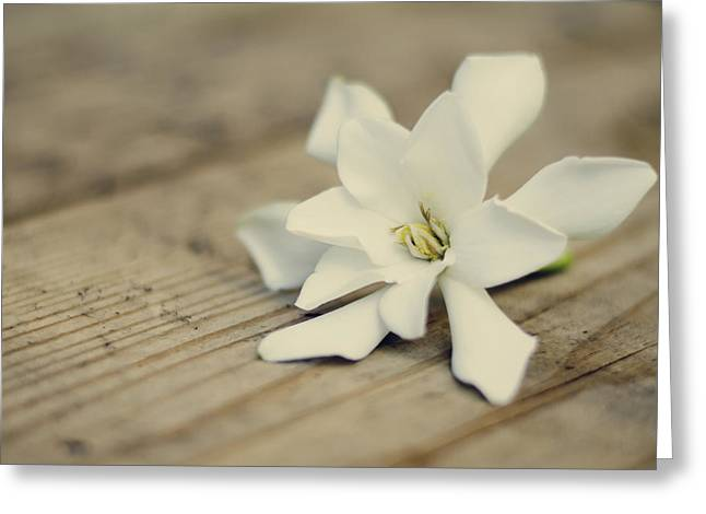 Gardenia Greeting Cards - White Gardenia Greeting Card by Heather Applegate