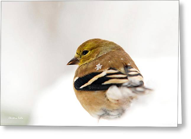 Snow Scenes Greeting Cards - White Gold Goldfinch Greeting Card by Christina Rollo