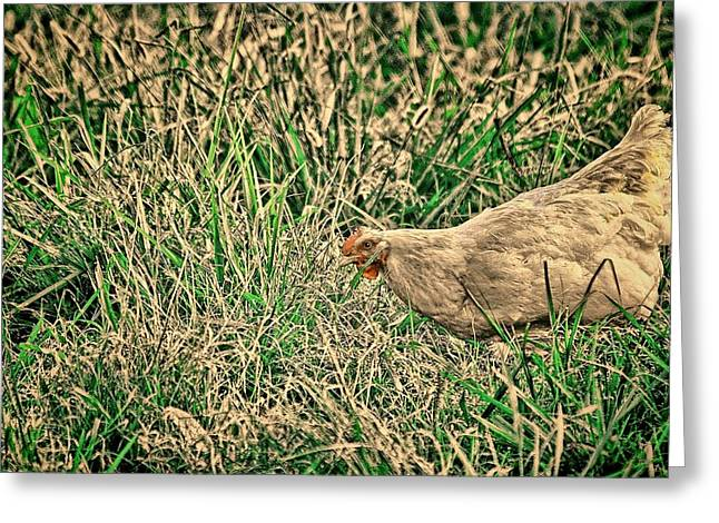 Chicken Greeting Cards - White Hen Art Greeting Card by Lesa Fine